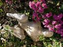 dans-les-chrysanthemes.jpg
