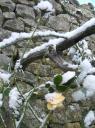 Jardins du Château du Pin sous la neige 4.