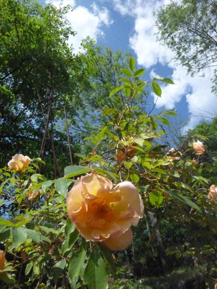 Les jardins du Pin - Printemps 2011
