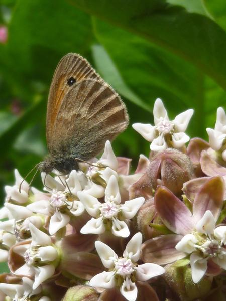 Papillon du premier jour d'été 2011