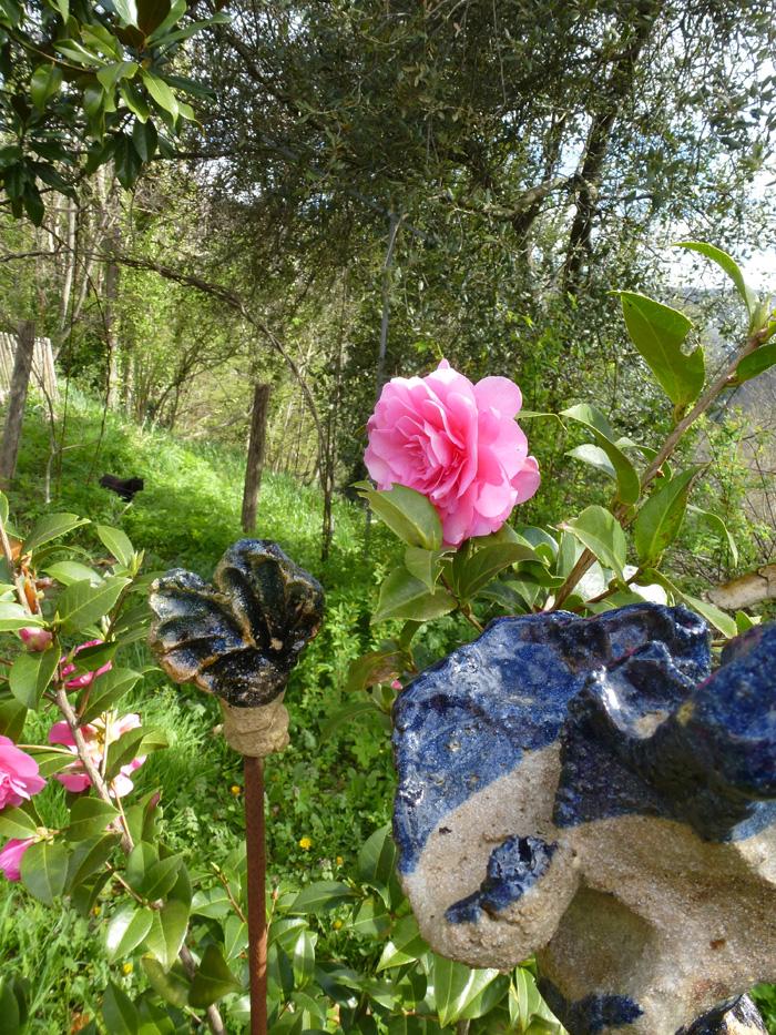 Roses du Pin 2015